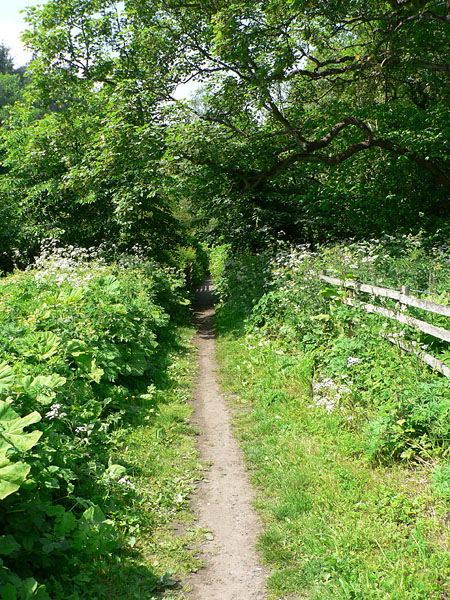 Footpath from Bothal Mill to Morpeth
