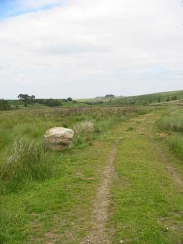 Hexham Common