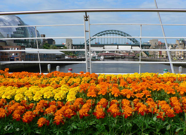 """Grand Welcome"" forms part of a wider celebration entitled NewcastleGateshead Welcomes the World"